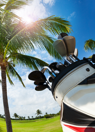 brassy: Golf bag with clubs against palm tree and sky Stock Photo