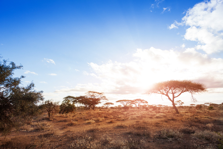 Landscapes of dry and arid African savannah