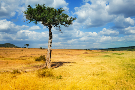 national geographic: Acacia tree in foreground of African landscape Stock Photo