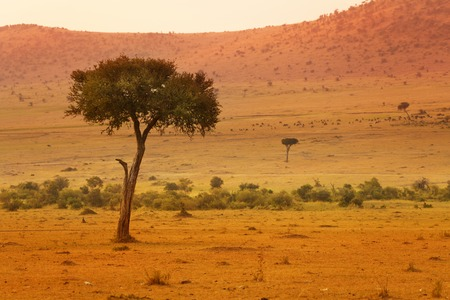 Beautiful view of African savannah at sunset