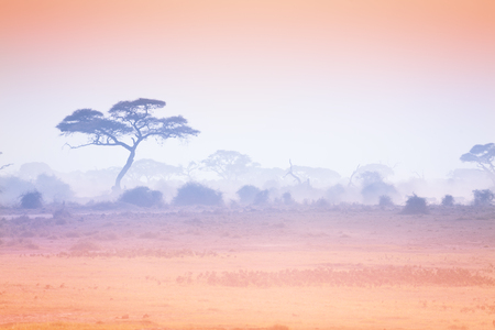Pastel pink and purple color of sunset at African savannah with silhouetted trees in a haze Stock Photo
