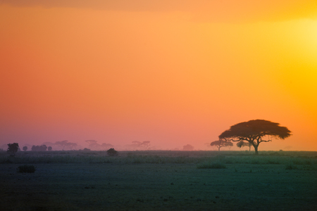 Beautiful scenery of African savannah at sunset with acacia tree silhouette Stock Photo