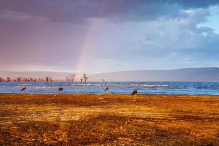 Double rainbow on the cloudy sky over Nakuru lake in Kenya, Africa