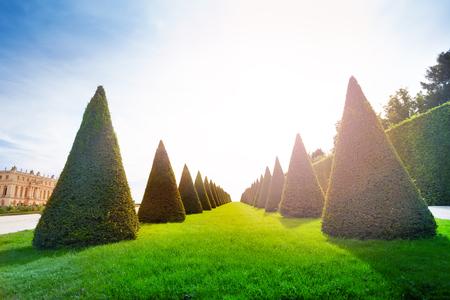 晴れた日に、フランスのヴェルサイユ宮殿の庭園で木の収束の行 写真素材