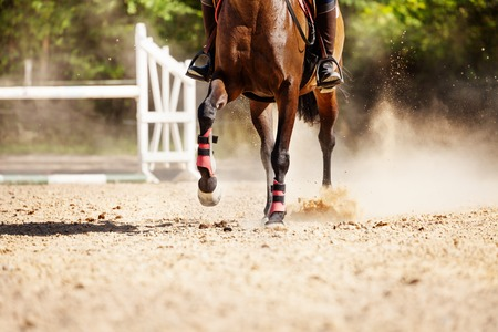 Picture of chestnut racehorse running at sand racetrack during show jumping competitions