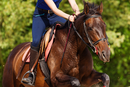 Close-up picture of running bay horse with rider