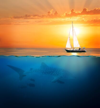 Half underwater shot with whale shark and yacht Stok Fotoğraf