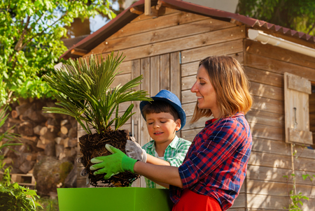 Mother and son planting up palm tree in container Imagens