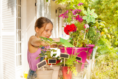Beautiful blond girl potting geranium on terrace Stok Fotoğraf