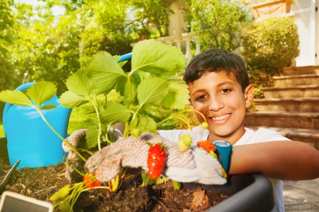 Happy boy planting strawberries in container