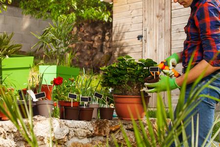 Gardener watering plants using hand sprinkler