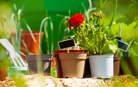 Flowerpots with blanked text labels outdoors