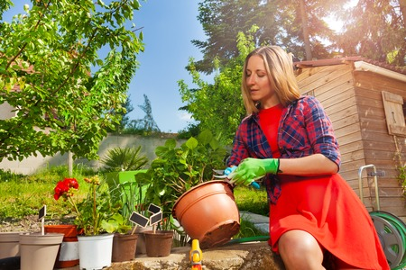 Beautiful woman cutting plants with garden pruner Stock Photo