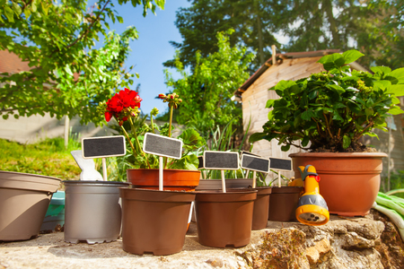 Flower pots with wooden labels in the garden