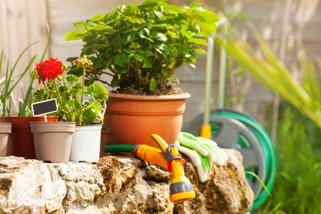 Gardening tools and ornamental plants outdoors Stock Photo