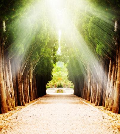 Allee mit jahrhundertealten Bäumen im Sonnenlicht