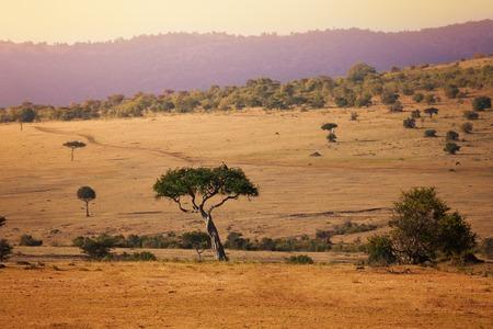 Fondo de sabana Parque natural de Masai Mara de Kenia Foto de archivo