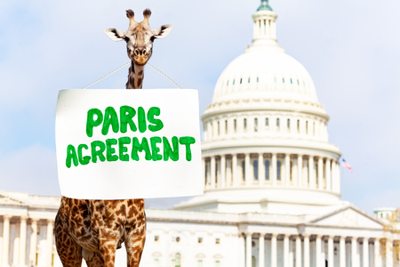 Giraffe, sign Paris Agreement for climate change
