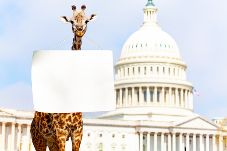 Giraffe protester with blank empty sign on neck Imagens - 117618447