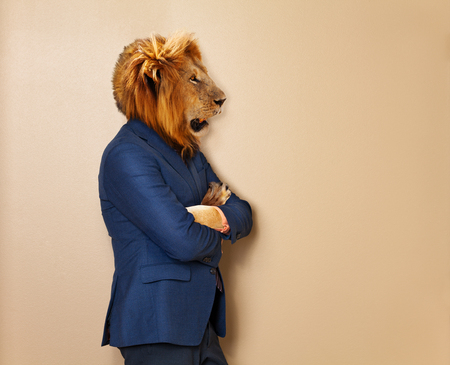 Male lion in office clothing suit and shirt Imagens