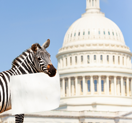 Zebra protester holding empty sign with copy-space Stock Photo