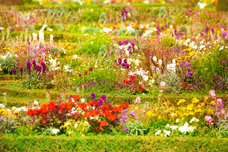 Flower beds at Versailles gardens in France 版權商用圖片