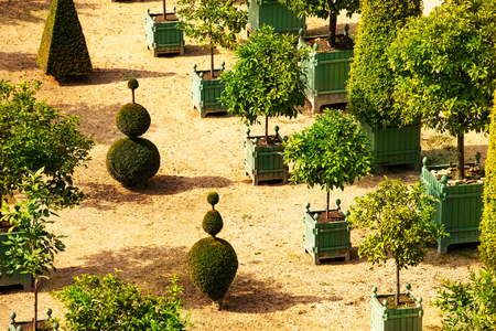 Versailles garden with citrus in planters, France Stock Photo