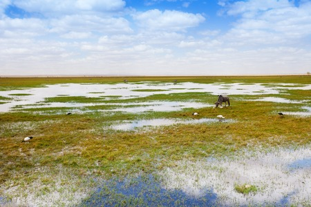 Landscape of a waterhole with drinking wildebeest