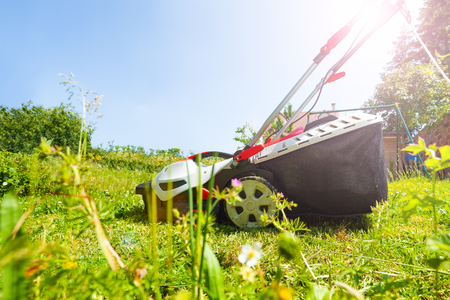 Lawnmower with grass box on the flowering lawn Stock fotó