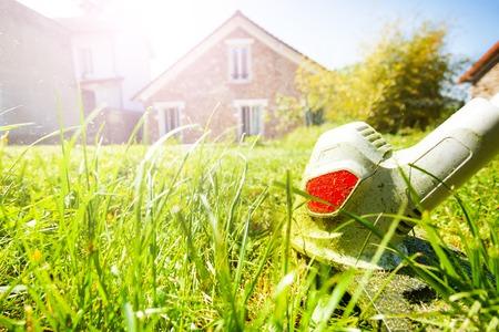 Whipper snipper cutting green grass at backyard