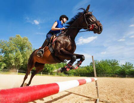 Cavallo baio con cavaliere femminile che salta sopra un ostacolo