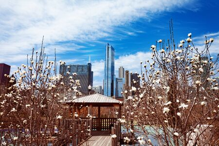 Spring trees and Chicago skyline from the park Stock Photo - 125271523