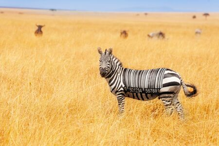 Zebra with bar code on the back concept in field
