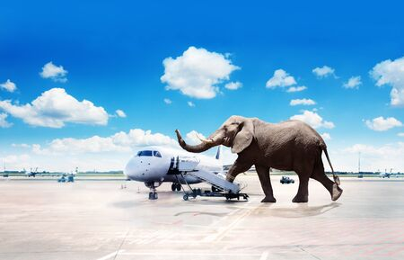 Big elephant oversized passenger board plane image 写真素材