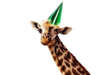 Happy head of giraffe on white wear birthday cap Foto de archivo - 137499054