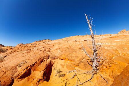 Dead wood on orange rock in the desert near Zebra spot Canyon in Utah, USA