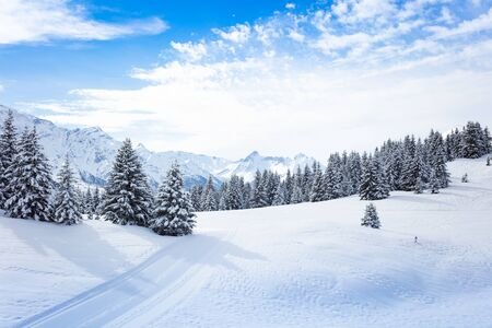 Winter fir and pine forest covered with snow after strong snowfall over Mont-Blanc mountain range on background on sunny frosty day Stock Photo