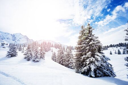 Beautiful covered with snow fir forest on mountain plane after strong snowfall during winter, French Alps