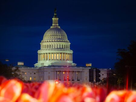 The United States Capitol Building home of the USA Congress at night behind tulip flowers on National Mall in Washington, D.C.