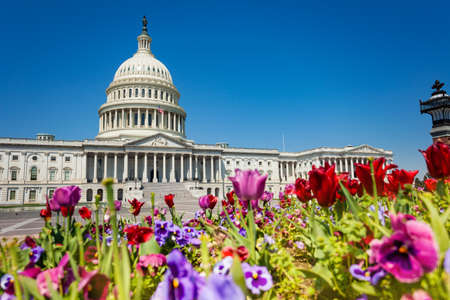 View of The United States Capitol Building home of the USA Congress through colorful flowers in Washington, D.C. Reklamní fotografie