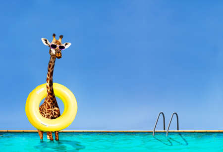 Funny photo of giraffe stand with inflatable doughnut in swimming pool over sky on summer resort Archivio Fotografico