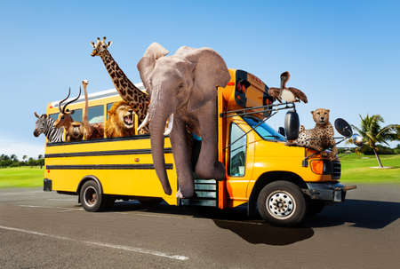 Zoo in the school bus concept with animals looking out of the windows, Elephant giraffe cheetah and others