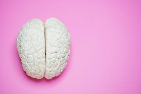 Photo of the human brain over pink background Zdjęcie Seryjne