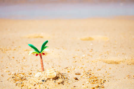 Miniature palm, seashell in sand desert close-up