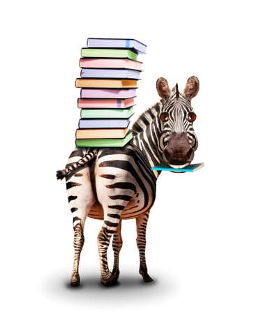 Zebra with books on the back and textbook concept
