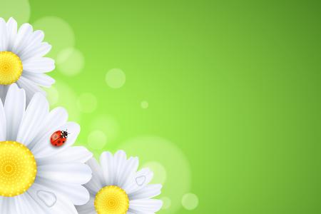 Spring background. Ladybug creeps on the flowers. Realistic daisies. Abstract lights bokeh. Seasonal banner for your design. Seasonal holiday. Water drops. Vector illustration. EPS 10