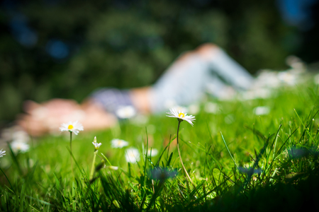 Chamomile flowers on green field in warm summer day on foreground. Young woman lying on the grass and big trees on blurred background.