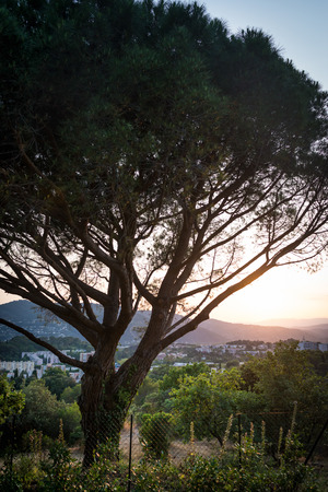 Big tree in the park with view on city hills and sunset. Sunlight rays falling on branches of tree and hills on background.