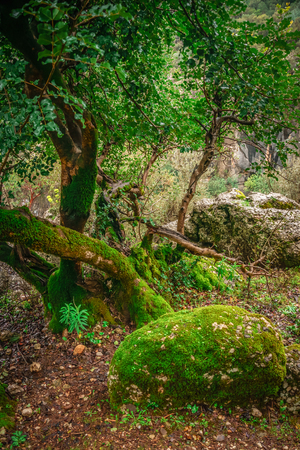 Forest landscape with mossy stone, mossy tree trunk and its root. Manavgat, Antalya, Turkey. Stock Photo