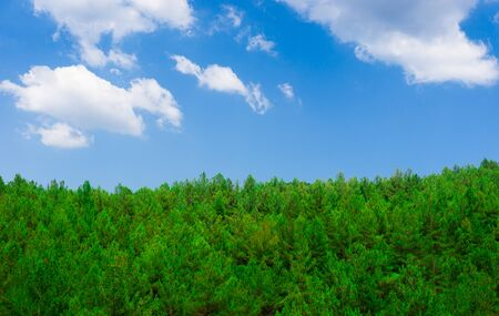 Green forest and blue sky. Spring season. Environmental concept